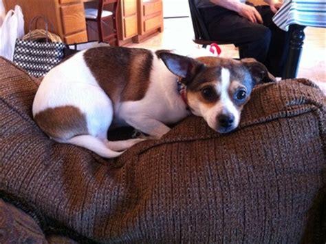 puppy pals rescue shelter sunday puppy pals rescue beavercreek ohio doggies