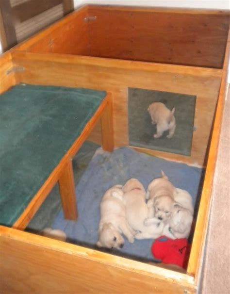 puppy whelping box 17 best ideas about whelping box on rooms and puppy care