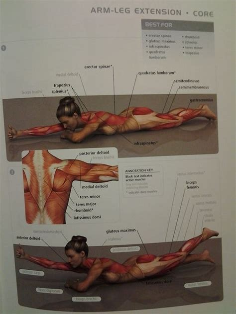 glute muscles diagram 35 best itsines images on work outs