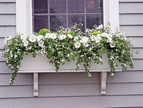 ideas for winter window boxes window box ideas 171 hyannis country garden