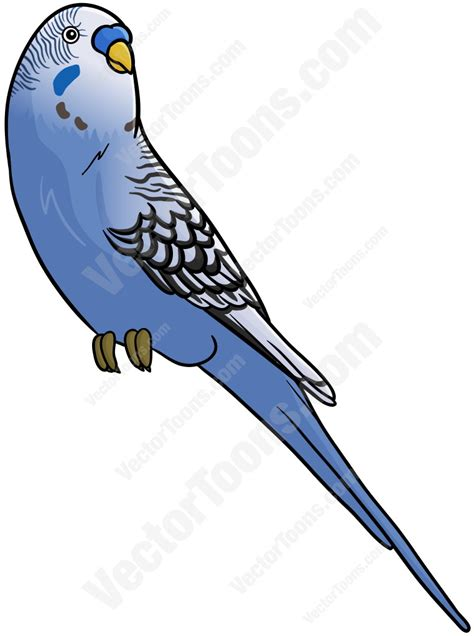 artwork clipart budgie clipart