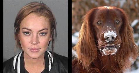 Lindsays Puppy by 16 Mugshots And Their Lookalikes