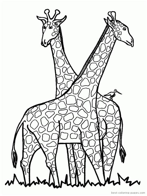 giraffe coloring pages pdf giraffes coloring pages best coloring pages free