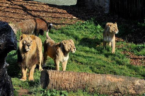 roma giardino zoologico roma pasqua da record al bioparco da sabato ad oggi 20
