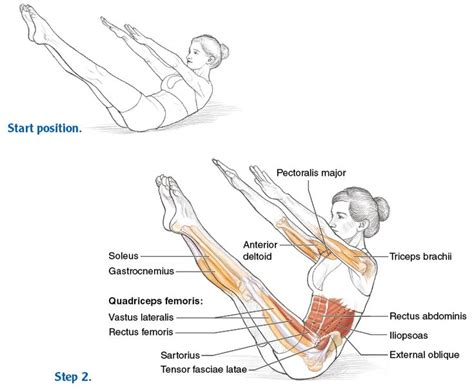 pilates anatomy 61 best 01 pilates images on yoga pilates anatomy and colour