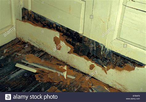 buying a house with dry rot wet rot coniophora cerebella cellar rot affection woodwork in old stock photo