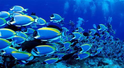 pengasaman laut pengaruhi kelangsungan hidup ikan