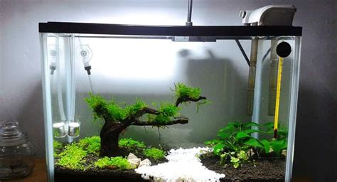membuat aquascape bening cara membuat aquarium mini archives taman air aquascape