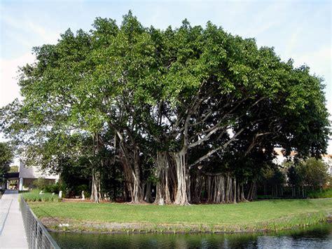 file leaves in the carlton pohon bisa hasilkan energi listrik the oracle world