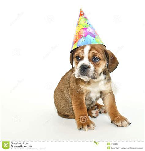 puppy birthday birthday puppy royalty free stock image image 22985236