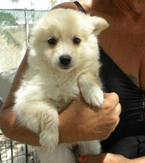 Pet Shed Australia by Posts Related To Medium Breeds That Dont Shed