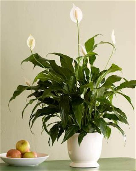 Common Apartment Plants Indoor Plants For Apartments At Southfield In Weymouth