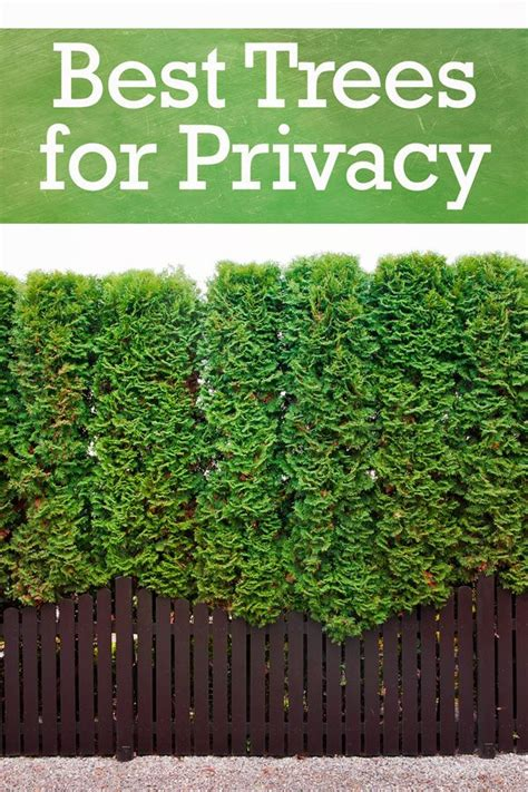 top  trees  backyard privacy privacy