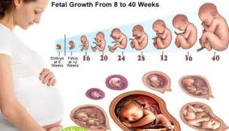 Baby growth during pregnancy month by month linkedin