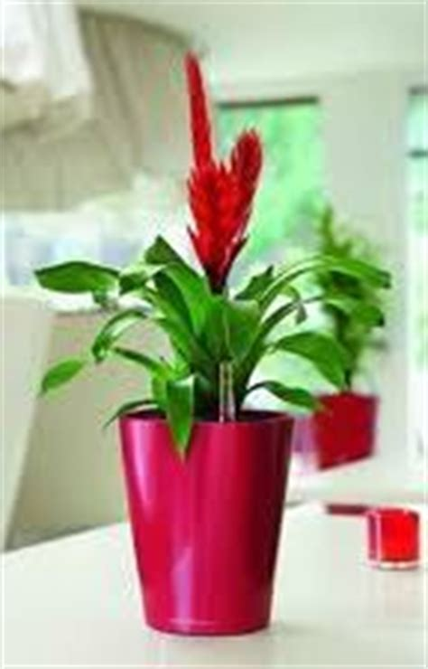 Living Decor Hire Plants Whangarei Hire Reception Plants Living Decor Indoor Plant Hire