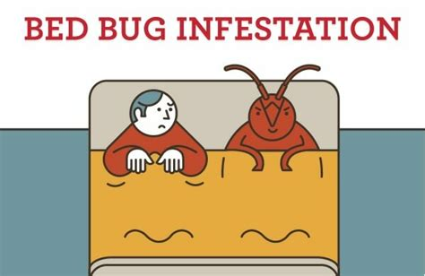 bedbugsinfestations    rid  bed bugs