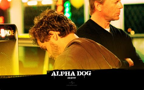 how to become the alpha with your puppy alpha images alpha hd wallpaper and background photos 27276448