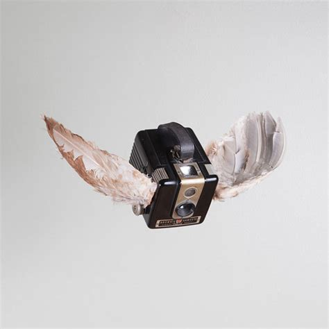 camera taxidermy portrayed in birds of aperture by paul