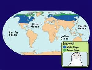 where do snowy owls live questions and answers