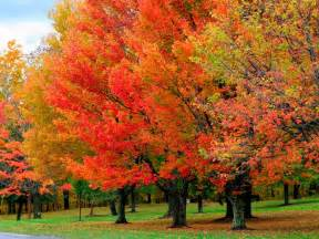 fall color trees quot r quot us inc november 2013