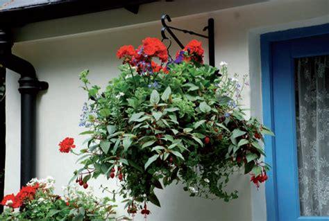 fiori in vaso da esterno pianta da esterno in vaso con cubi per le piante fuori e