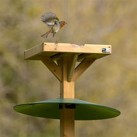 bird table squirrel baffle rspb wild bird feeder guards