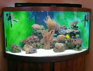 guide to setting up a fish tank do not set up a marine aquarium unless