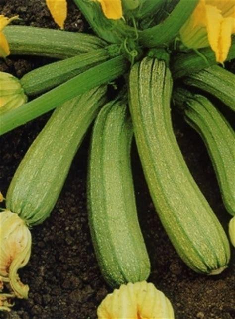 topinambur coltivazione in vaso progetto orto coltivare orto