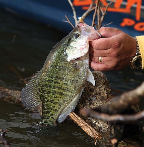top options  february crappie fishing  georgia game