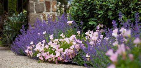 cottage garden plants australia garden design 25942 garden inspiration ideas