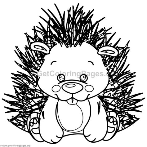 cute baby porcupine animal coloring pages