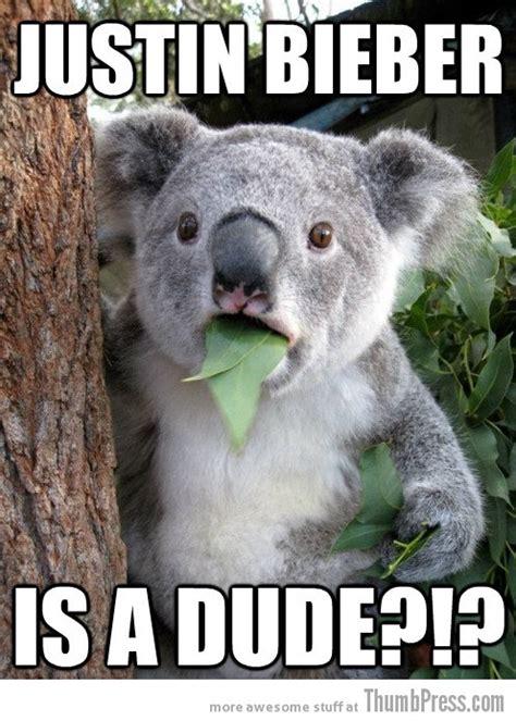 Koala Bear Meme - pin koala bear drawing cake on pinterest