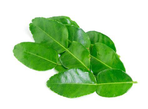 13 health benefits of kaffir lime leaves no 2 is impressive dr heben
