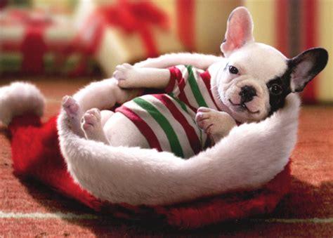 santa puppy puppy sitting in santa hat box of 10 cards by avanti press