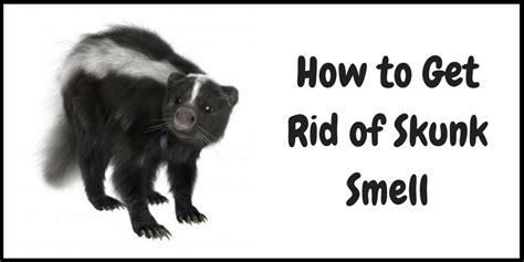 how do you get rid of skunks in your backyard how to get rid of skunk smell on dog