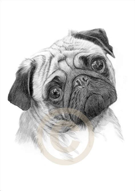 drawings of pugs 17 best ideas about drawings of cats on cat drawing designs to draw and