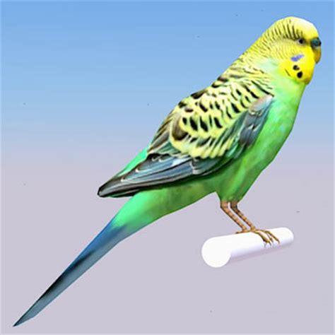 budgerigar parakeet 3d model formfonts 3d models