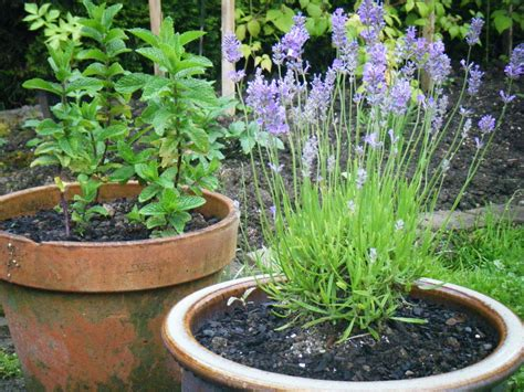 container gardening for food food warrior 5 tips for successful container gardening