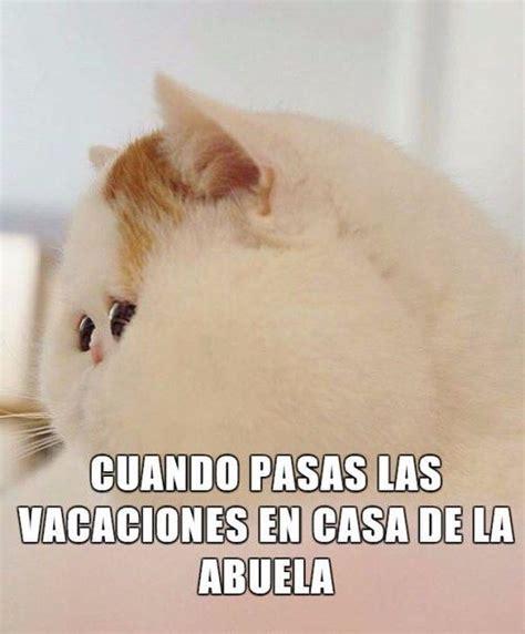 imagenes hot de humor 1441 best images about humor on pinterest amigos ja ja