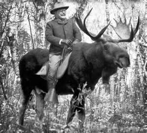 Teddy roosevelt riding a bull moose quot posters by libertymaniacs
