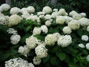 Annabel Flowers - keep annabelle standing the garden bench