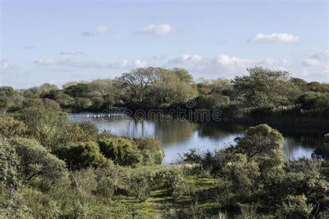 pond  green grass  wild landscape stock image