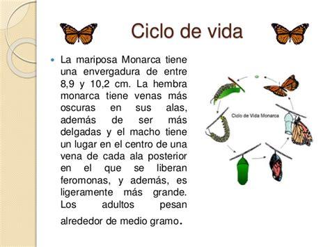 libro el monarca de las mariposa monarca