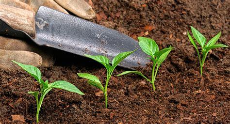 imagenes abonos verdes cinco tipos de abonos org 225 nicos para tu jard 237 n o huerto
