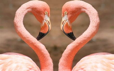pink flamingos pink flamingo hearts fashion art love