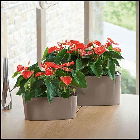 Windowsill Herb Garden Containers by Windowsill Herb Garden Planter 5 Colors
