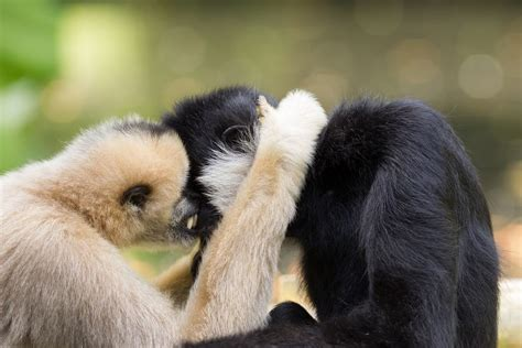 Home Design Remodeling by Gibbons 11 Animals That Mate For Life Mnn Mother