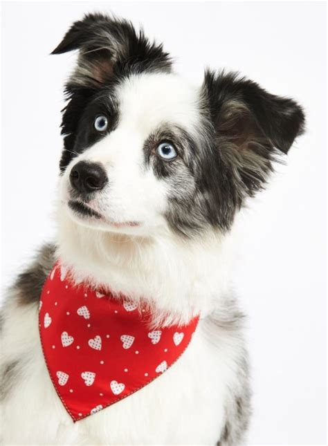 bandanas for dogs bandanas for dogs designer bandanas at chelsea dogs