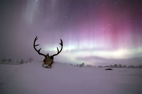lushescapes sweden northern lights lapland skiing