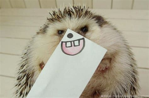 Best Desk Fans Hedgehog Faces The Cutest Thing On Twitter Right Now